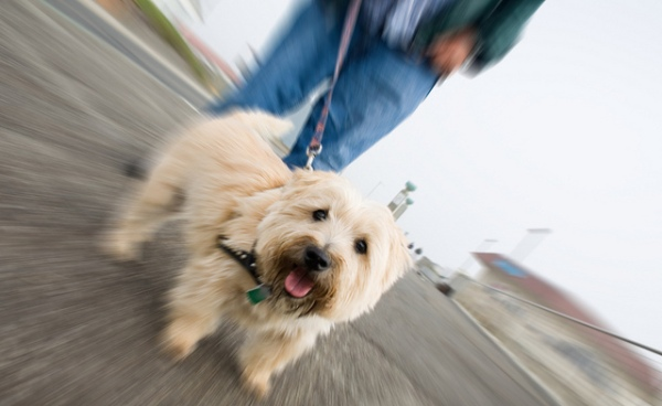 photo of dog being walked for Professional Pet Sitter's Week