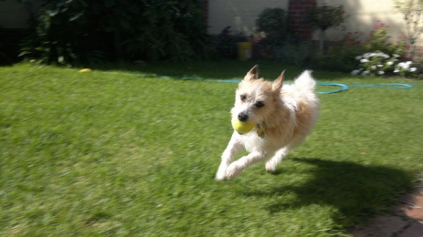 RunningDog