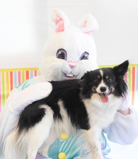 pet-pictures-with-easter-bunny