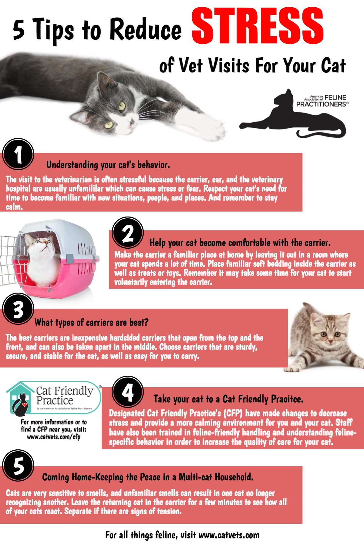 reducing cat stress during veterinary visits - HD800×1208