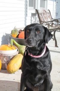 Dog & Fall Gourds